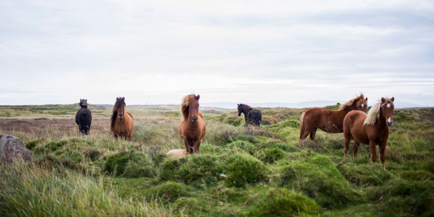 A blog post about wild horses